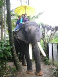 Payal elephant